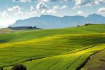 Accelera il 7° Censimento generale dell'agricoltura