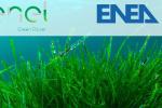 Egp-Enea, accordo per innovativo impianto-pilota agrivoltaico
