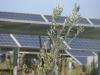 Enea lancia prima rete nazionale per l'agrivoltaico sostenibile