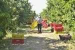L'occupazione in agricoltura ha tenuto