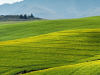 La Regione Piemonte potenzierà l'agricoltura con il Recovery Fund