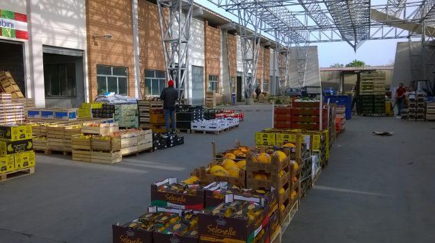 mercato ortofrutticolo Mortara, reggio calabria, Reggio, Cronaca