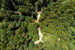 Calabria, bosco di abete bianco a Serra S. Bruno