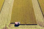 Ue presenterà strategia sostegno 'ad hoc' per aree rurali