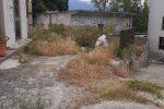 """Messina, il cimitero di Gesso come una selva. L'appello: """"Date ai morti almeno un po' di decoro"""""""