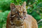 L'Eurocamera chiede una legge a sostegno della biodiversità