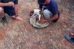 Cagnolina cade in un pozzo nel Catanese. Salvata dai vigili del fuoco