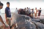 """Yemen: pescatori trovano un """"tesoro"""" da 1,5 mln di dollari nel ventre di un capodoglio - VIDEO"""