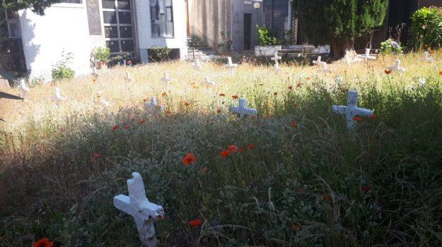 cimitero, gizzeria, Catanzaro, Cronaca