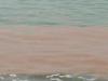 """Mare sporco e turisti in fuga da Nicotera? Gli Enti si """"affidano"""" allo... scaricabarile"""