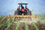 """Agricoltura, Conaf """"Serve innovazione per filiera di grande importanza"""""""