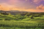 Agroalimentare, il cloud a supporto dello sviluppo sostenibile