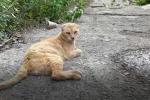 Gatti avvelenati per vendetta, soffocati per gioco dentro buste di plastica o allevati per combattere: succede a Messina