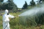 Messinaservizi, da domani disinfestazione contro insetti e zanzare