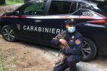 San Giovanni, capriolo salvato da carabinieri nel Parco nazionale della Sila VIDEO