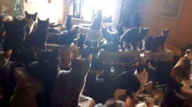 gatti, maltrattamenti, Sicilia, Cronaca