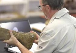 Identificata una nuova specie di dinosauro: è il più grande mai esistito All'Eromanga Natural History Museum, in Australia - Ansa