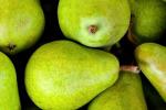 In Emilia Romagna al via programma di rilancio della pera Igp