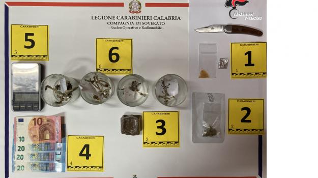 arresto, carabinieri, hashish, petrizi, sostanze allucinogene, Catanzaro, Cronaca