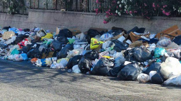 crisi ambientale, degrado, invasione di topi, reggio calabria, Reggio, Cronaca