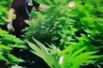 Lamezia, oltre 2000 piante di marijuana: scoperta una piantagione, in manette il proprietario