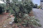 Maltempo, Abate: intervenire su danni Sibaritide e Pollino