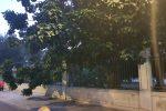Reggio Calabria, si spezza ramo della villa comunale. La recinzione evita il peggio