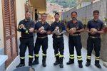 Tropea, i vigili del fuoco salvano cinque cagnolini finiti in una scarpata