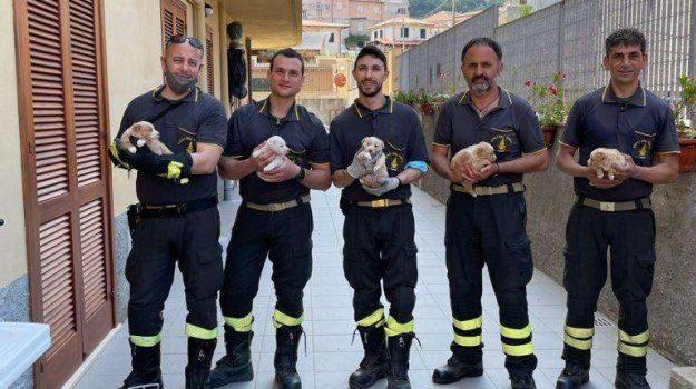 cuccioli, tropea, vigili fuoco, Catanzaro, Cronaca