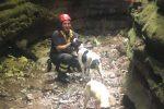 Il salvataggio dei cani dispersi a Polia, il video dell'intervento dei pompieri