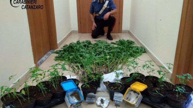 squillace, un arresto per droga, valleforita, Catanzaro, Cronaca