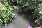 """Rende, le acque """"morte"""" del fiume Surdo spaventano residenti e associazioni"""