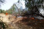 Vasto incendio nelle campagne di Sant'Andrea Ionio. Protezione civile in azione