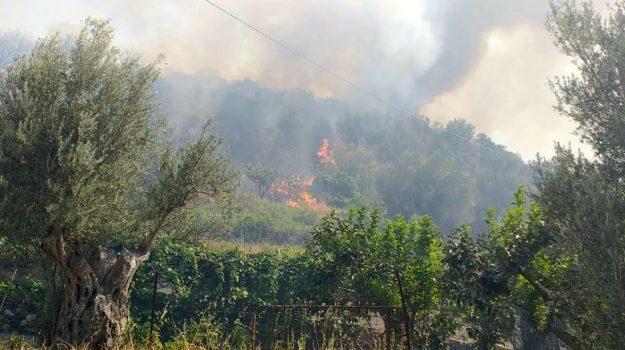 calabria verde, incendio zona oliveto, reggio calabria, vigili del fuoco, Reggio, Cronaca