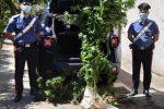Coltivava cannabis tra gli ortaggi, arrestato 57enne di Albi