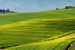 Agroalimentare in Calabria, pubblicata graduatoria bando meccanizzazione