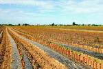Agrobiodiversità, 790mila euro per razze e varietà a rischio in Toscana