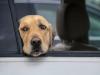 Messina, dimenticati in macchina: 4 cani muoiono per asfissia