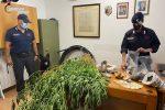 Scoperta una coltivazione di marijuana a San Vincenzo la Costa: 50enne ai domiciliari