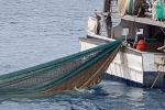 Contributi pesca Toscana, velocizzata procedura graduatorie gruppi Flag
