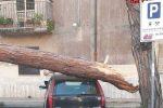 Vibo Valentia, un grosso pino cade su un'auto in sosta e trancia cavi telefonici