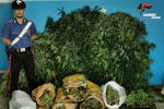 Diciotto chili di marijuana nel magazzino, arrestato 40enne di Isola Capo Rizzuto