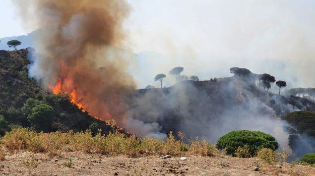 catania, incendi sicilia, Nello Musumeci, Sicilia, Cronaca
