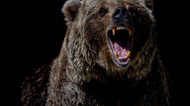 orso, Sicilia, Mondo