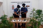 Cannabis in una piantagione, arrestato un 47enne di Pace del Mela
