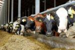 Nel 2020 produzione di mangimi sfonda quota 15 milioni di tonnellate