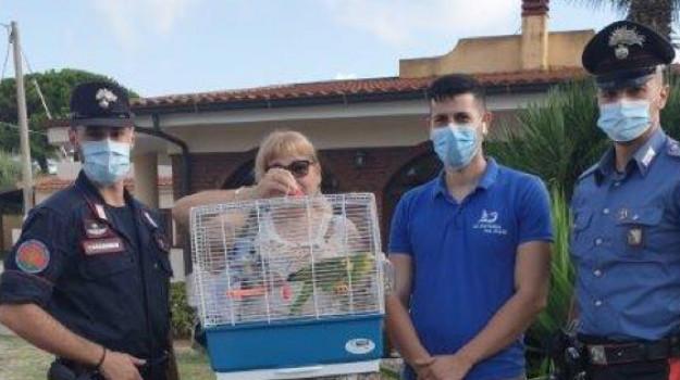 Pappagallo in fuga a Ricadi: ritrovato e restituito alla proprietaria
