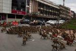 Rissa per il cibo: decine di scimmie in strada in Thailandia
