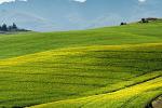 """Toscana, Saccardi """"Trasferire innovazione al comparto agricolo"""""""