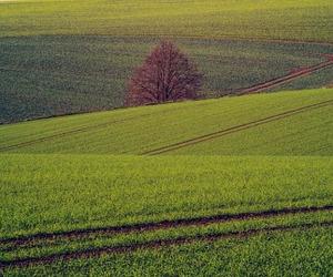 """Zannier """"Con 25 mln sosteniamo comparto agricolo in Friuli"""""""
